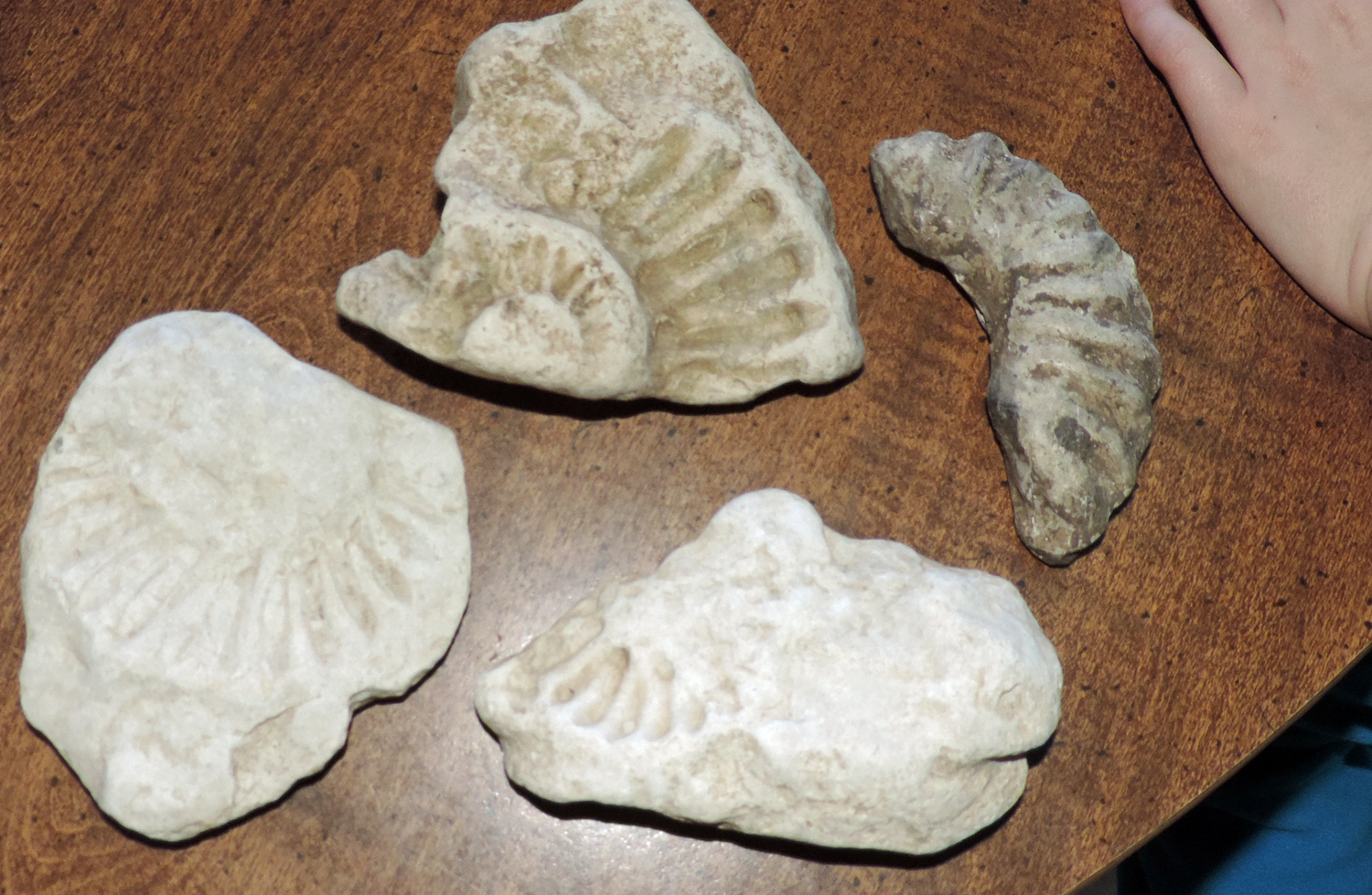 Fossils and Shells
